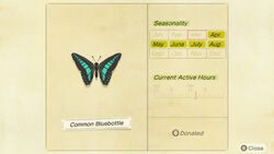 NH-encyclopedia-Common bluebottle.jpg