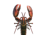 Lobster (deep-sea creature)