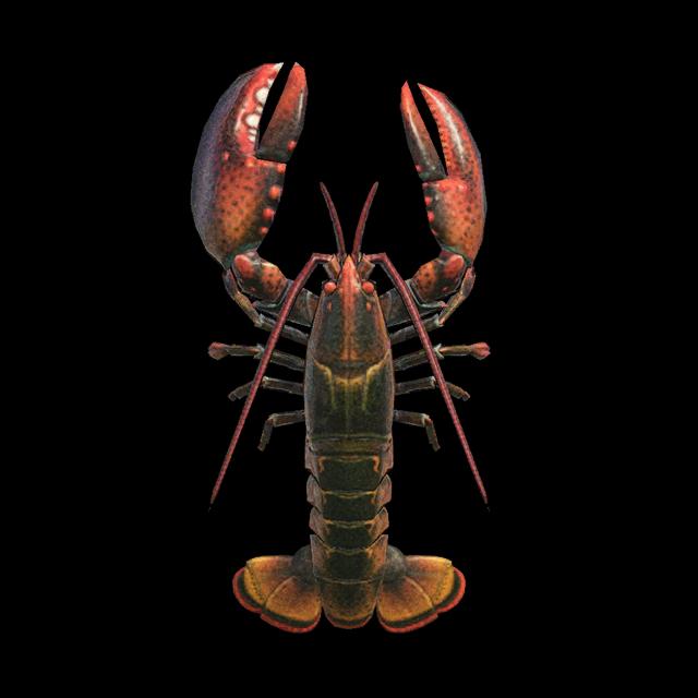 Lobster (deep-sea creature)