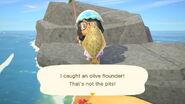 NH Olive flounder catch