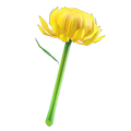 NH-Mum wand