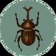 Dynastid Beetle (City Folk).png