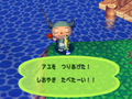 Sweetfish (Animal Forest caught) (7)