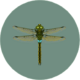 Darner Dragonfly (City Folk).png