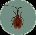 Violin Beetle (City Folk).png