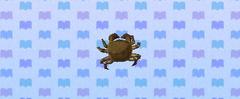 Mitten crab.png