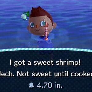 Sweet Shrimp.jpeg