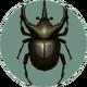 Atlas Beetle (City Folk).png