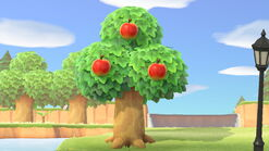 NH-Apple Tree