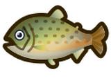 遠東哲羅魚