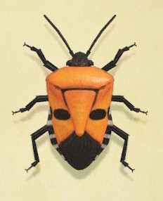 Man-faced stink bug