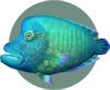 Napoleon Fish (City Folk).png