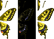 Tiger Butterfly (City Folk texture design)