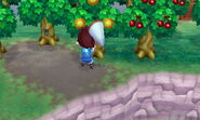 Giant cicada on tree