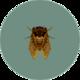 Brown Cicada (City Folk).png