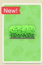 Hedges DIY.PNG
