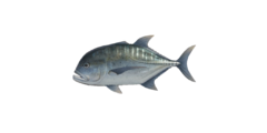 Giant trevally nh.png