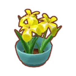 Potted Yellow Irises