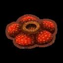 Int oth rafflesia.png