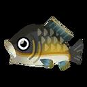 Fish Koi.png
