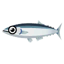 Pacific Saury.png