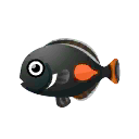 Achilles Surgeonfish.png