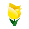 Yellow Tulips.png