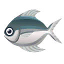 Fish Manakatsuo.png