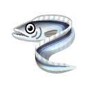 Fish tachiuo.png