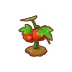 Farmer's Tomatoes