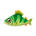 Yellow Perch.png