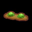 Int gar11 cabbage cmps.png
