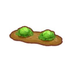 Garden Cabbage Patch