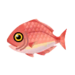 Island Red Snapper