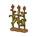 Int oth corn.png