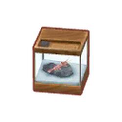 Sweet Shrimp Tank