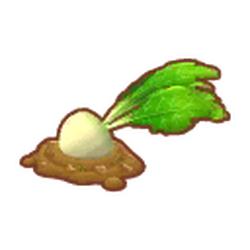 Giant Garden Turnip