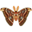 Insect yonaguni.png