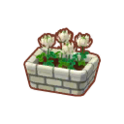 Potted White Clovers