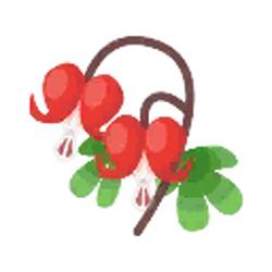 Maroon Bleeding Hearts