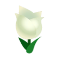 White Tulips.png
