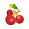 Fg lychee d.png