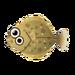 Island Olive Flounder