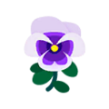White Pansies.png