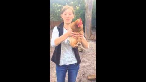 PoultryHandling