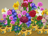 Birth Flowers Collection