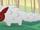 Pet Pangolin