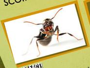Ant Image 1