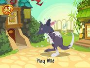 AnimalJam 1 kangaroo