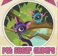 Pet sugar gliders
